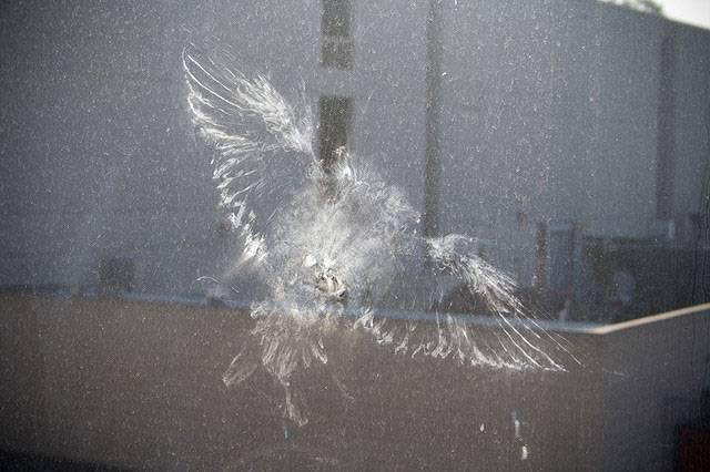 Что означает, если голубь стучится в окно