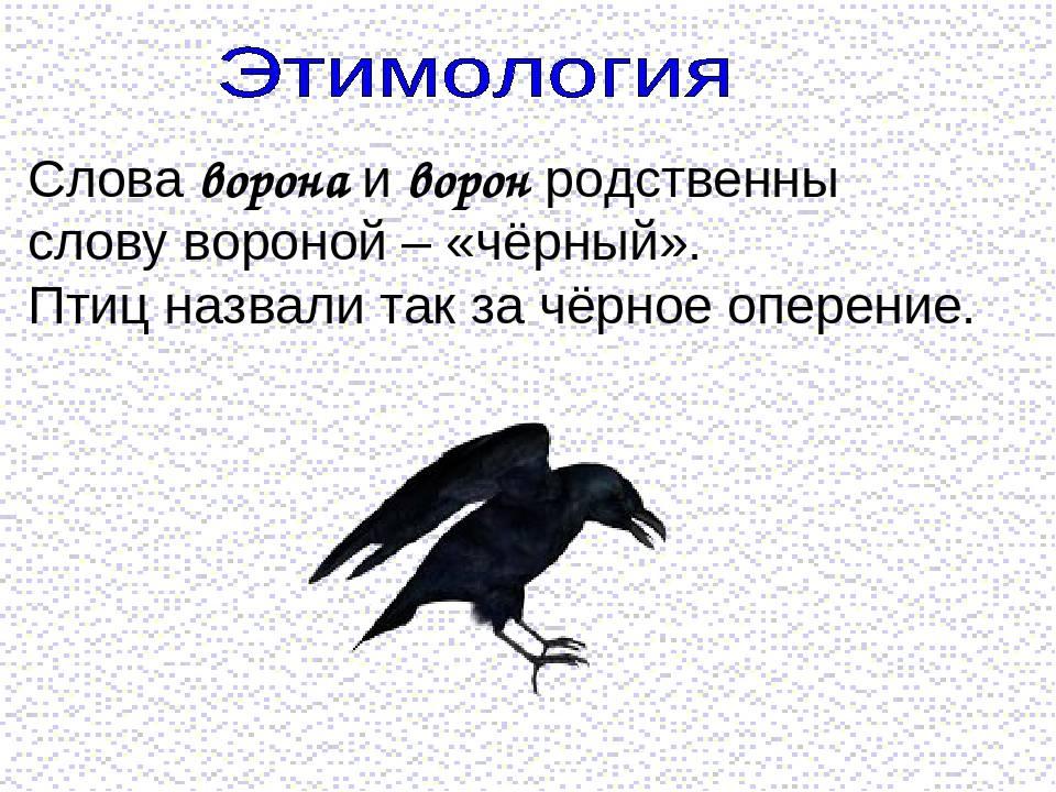 Приметы, если ворона села на голову или задела ее