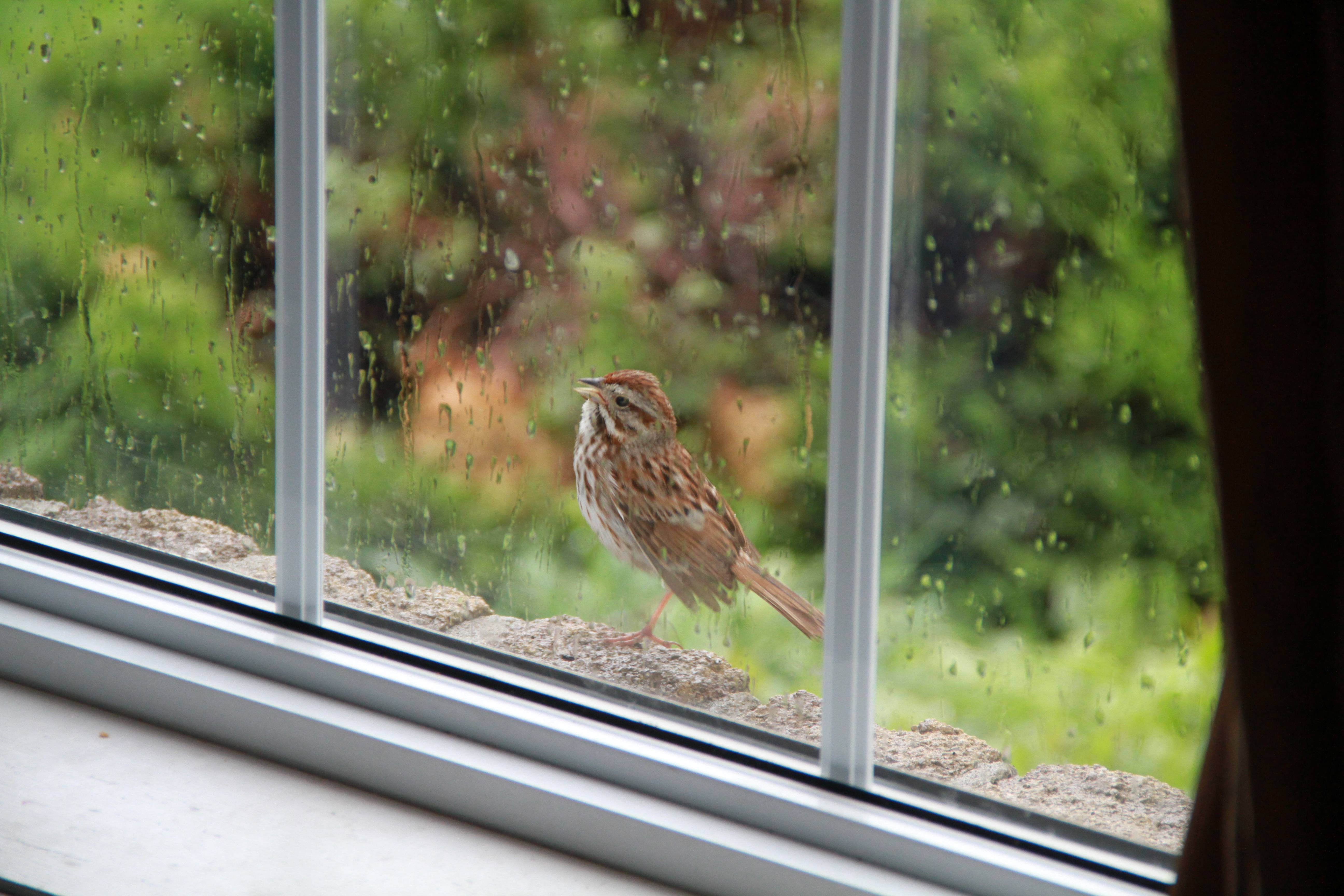 Птичка стучит в окно машины примета. приметы – птица стучит в окно