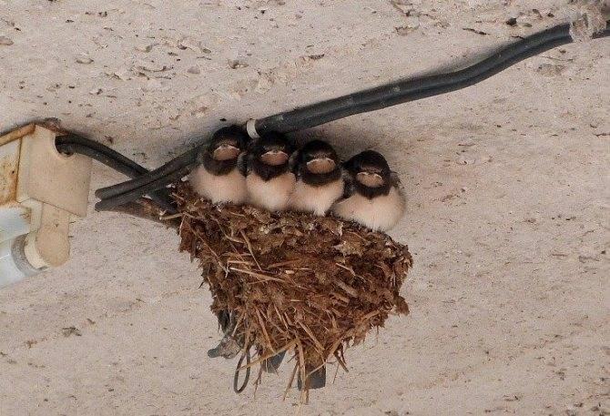 Примета - птица залетела в дом, что это значит?