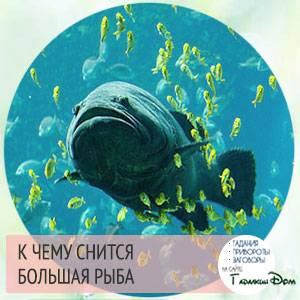 К чему снится рыба мужчине: толкование по сонникам
