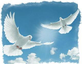 Приметы про белого голубя