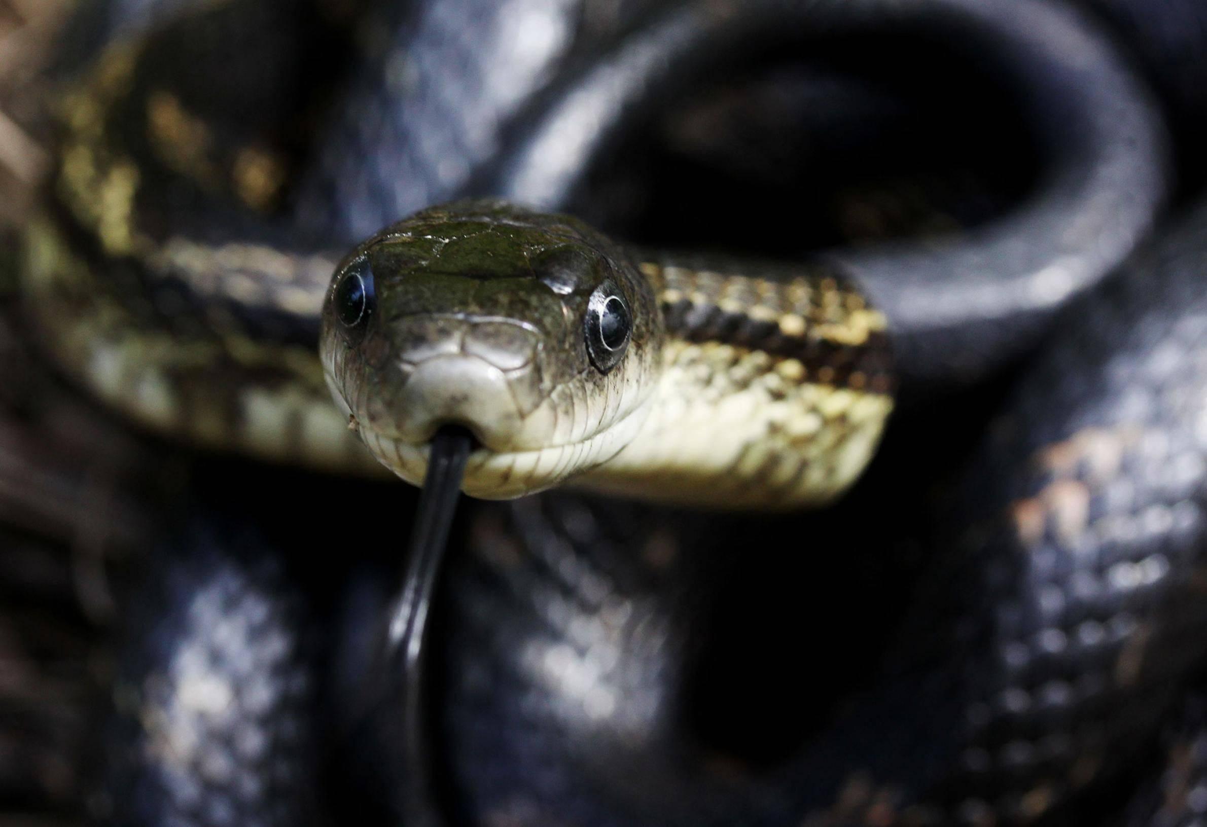 Сонник змеи смотрят. к чему снится змеи смотрят видеть во сне - сонник дома солнца