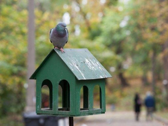 Птица нагадила на плече, голову, одежду