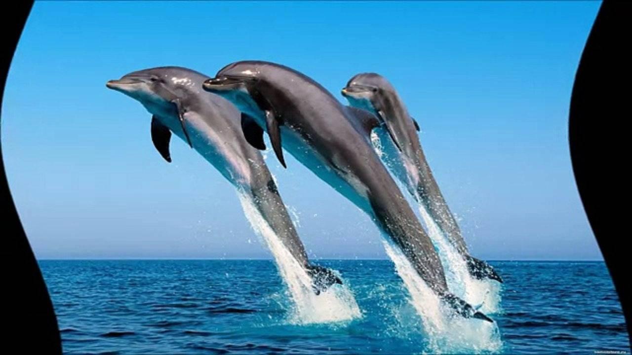 Дельфин — счастливый символ во сне. но всегда ли он снится к добру?
