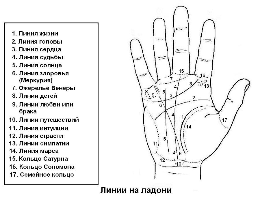 Как читать линии на руке? значение, расшифровка линий, предсказание будущего по ним + фото