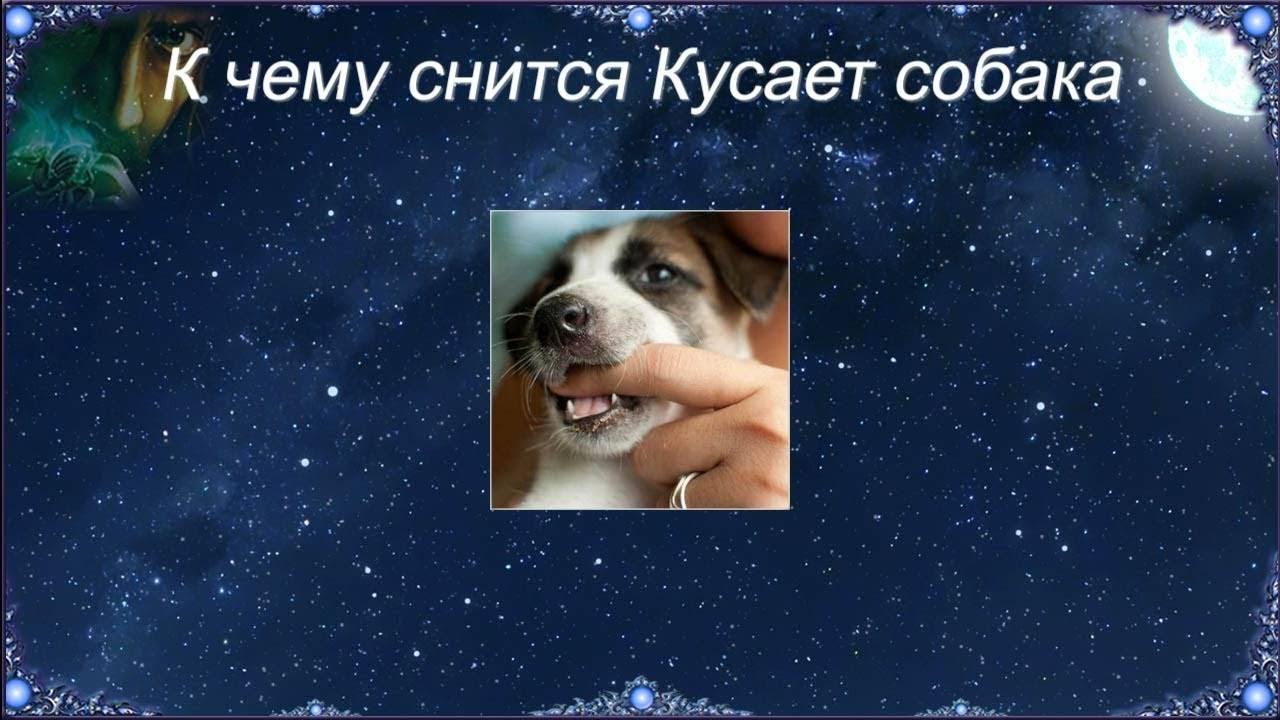 Во сне укусила собака