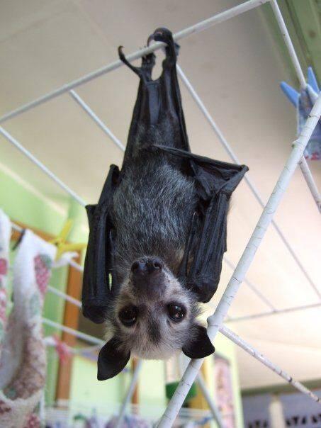 Летучая мышь залетела в квартиру, дом: примета. летучие мыши в доме: это хорошо или плохо, это к деньгам или свадьбе?