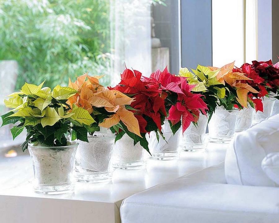 Приметы - цветы дома: можно ли и какие держать, почему нельзя искусственные?