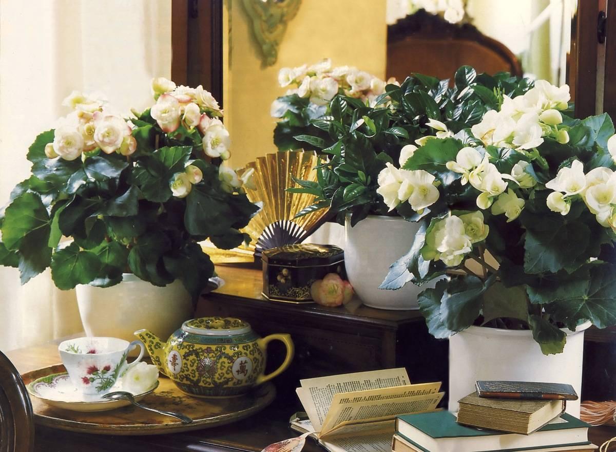 Народные приметы про комнатные цветы