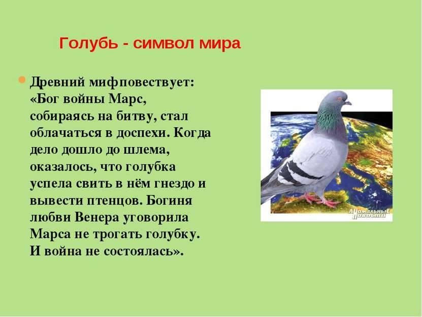 Какие существуют приметы и суеверия про голубей. приметы о голубе, что символизирует белый, к чему поселился рядом