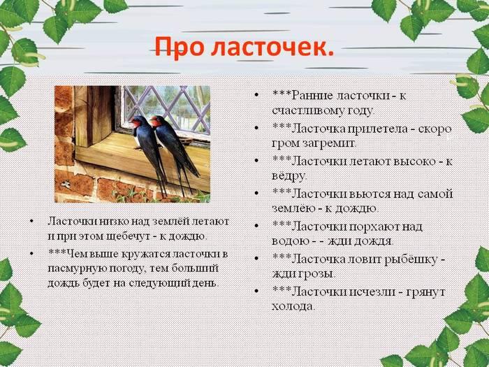 Приметы про белого голубя: к чему прилетел во двор, что означает увидеть его на улице, дороге, символ чего птица