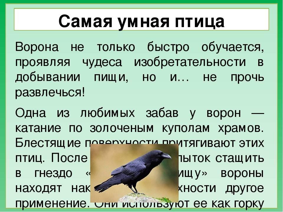 Приметы с воронами – 7 самых интересных и достоверных к чему каркают