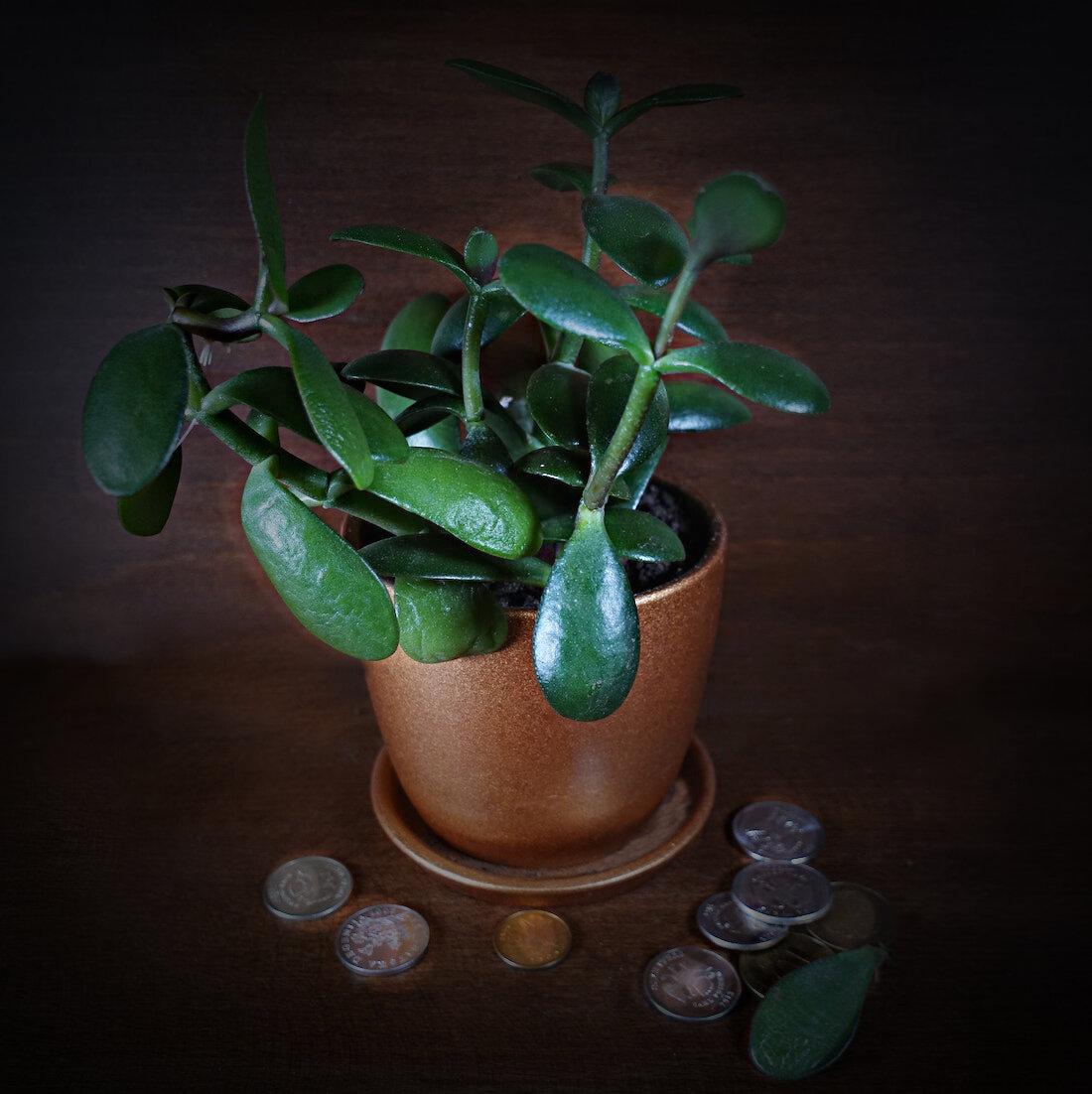 Заговор на денежное дерево: самые эффективные ритуалы