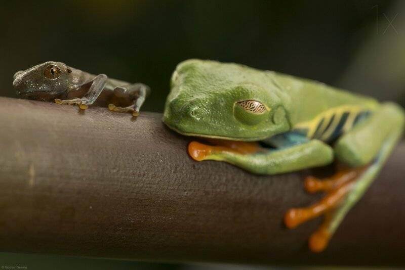 Увидеть лягушку на дороге: примета - почему нельзя убивать лягушек?