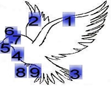 Гадание онлайн почтовая голубка. любовное онлайн гадание почтовая голубка