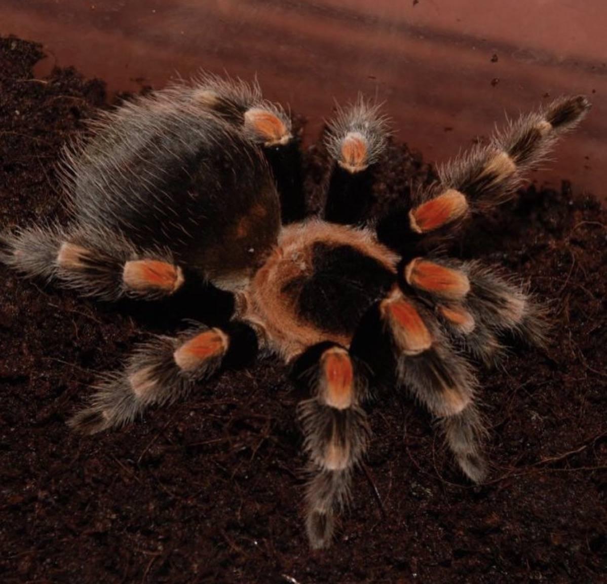 Сонник есть пауков. к чему снится есть пауков видеть во сне - сонник дома солнца