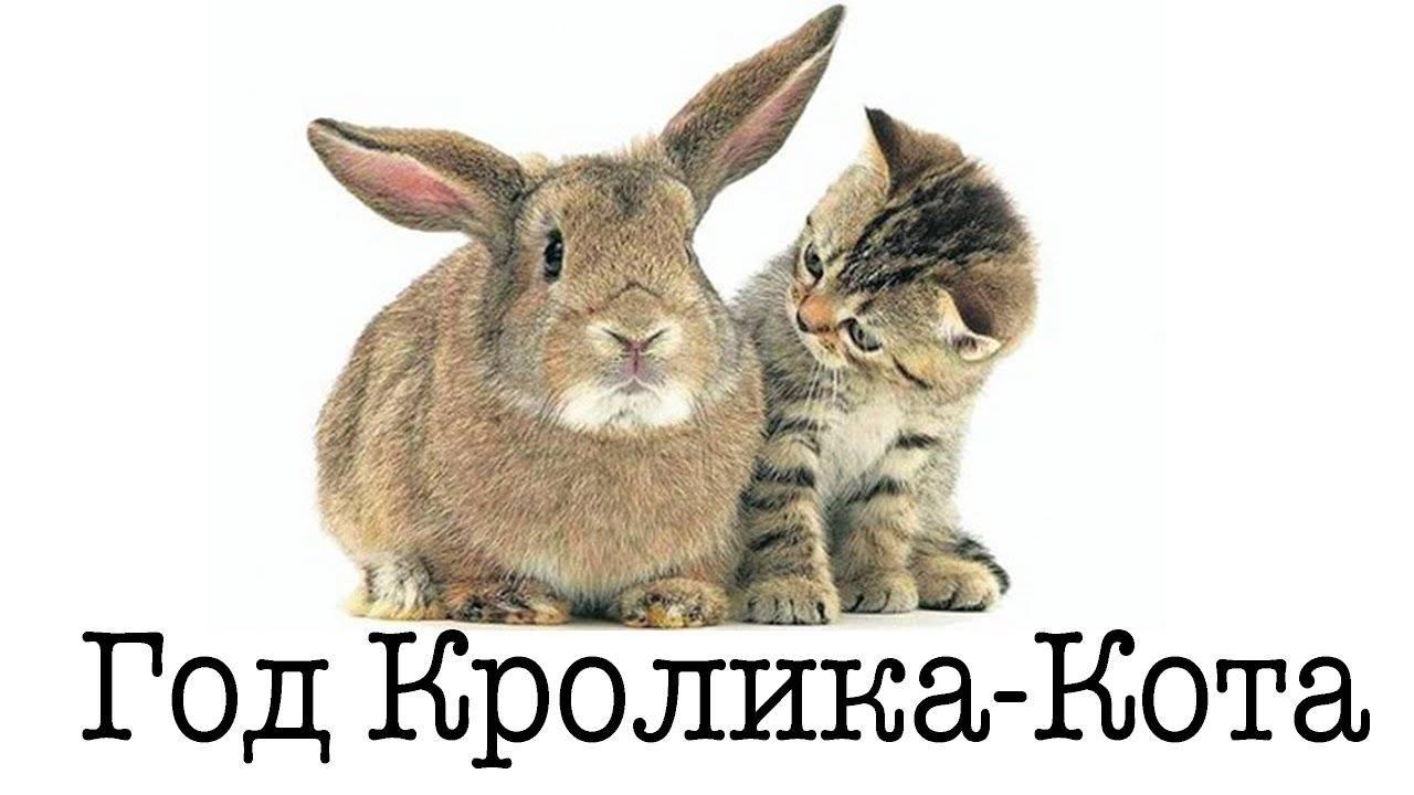 Мужчина кот (кролик) – характеристика года рождения