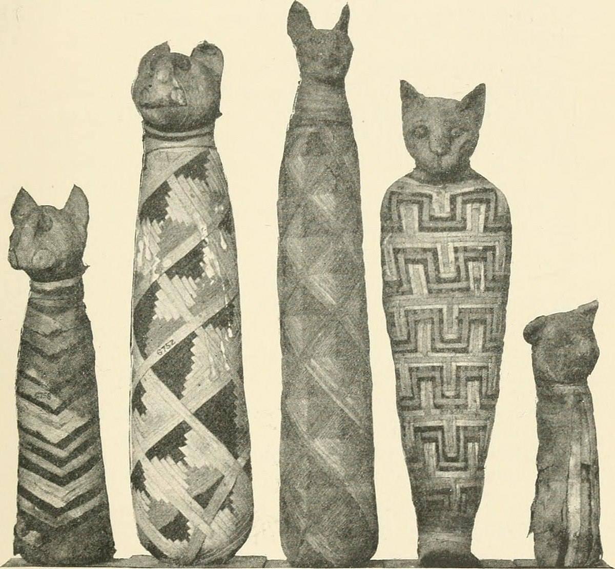 Мистические свойства кошек – что особенного есть в кошачьих?