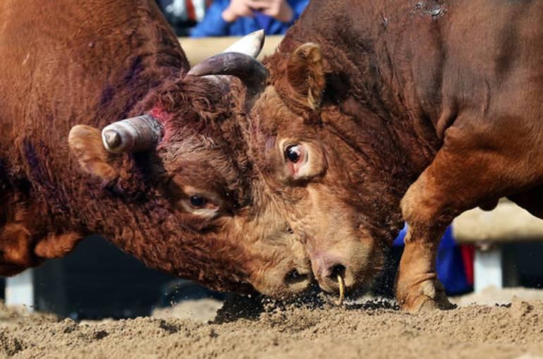 Сонник бык, к чему снится бык во сне видеть | сонник