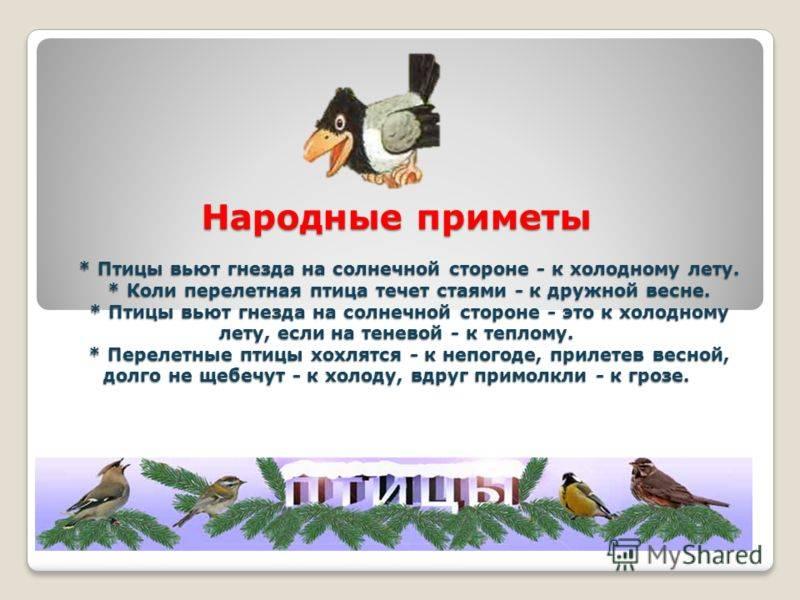 Примета: найти перо птицы на улице, дома, на балконе, залетело в окно, что значит белое, голубиное