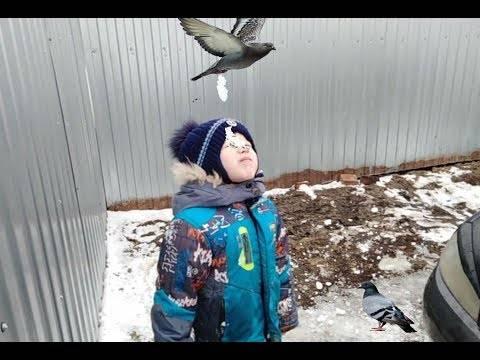Птица накакала на голову, руку, плечо: примета