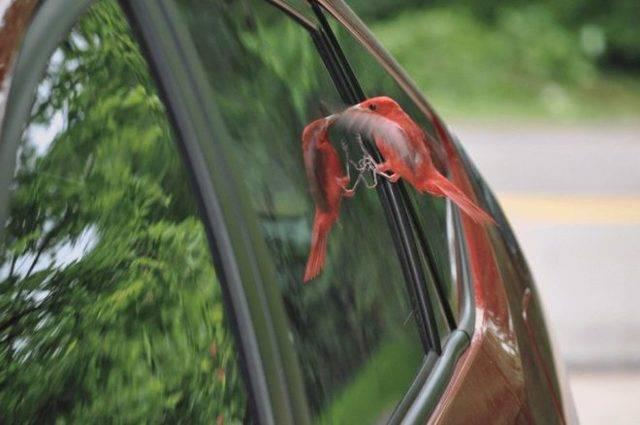 Птица ударилась в окно и улетела: значение приметы