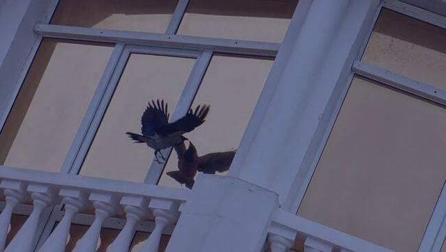 Птица ударилась в окно и улетела - что означает примета