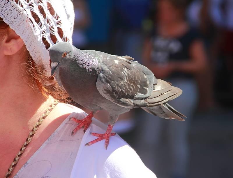 Ворона клюнула в голову: что означает примета и её последствия