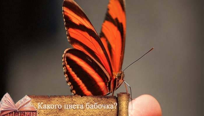 Бабочка залетела в дом или квартиру: приметы и поверья
