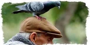 "Примета ""птица накакала на одежду"" к добру"
