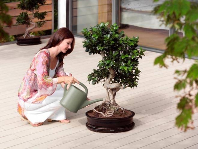 Магические свойства деревьев — как воспользоваться