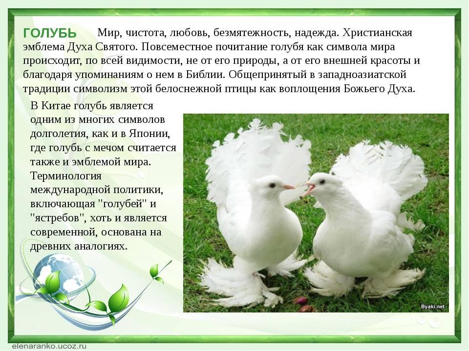 Примета - голуби разворковались, к чему голубь ударился в окно и улетел, приметы про голубей
