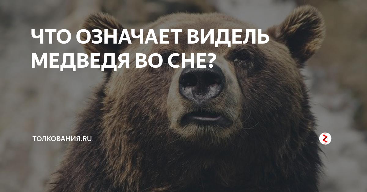 К чему снятся медвежата: толкование по различным сонникам для мужчин и женщин