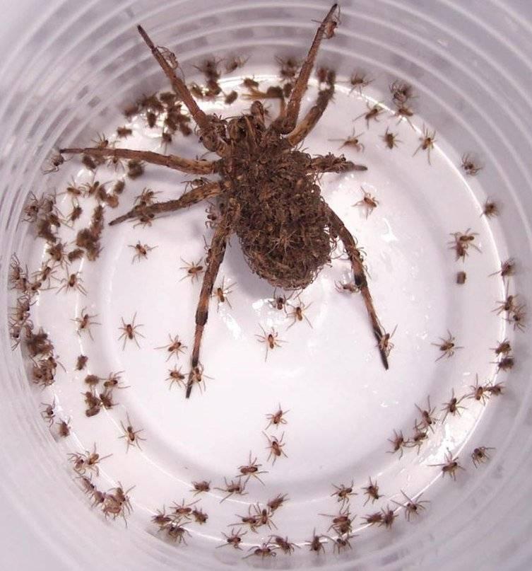 Сонник пауки много много. к чему снится пауки много много видеть во сне - сонник дома солнца