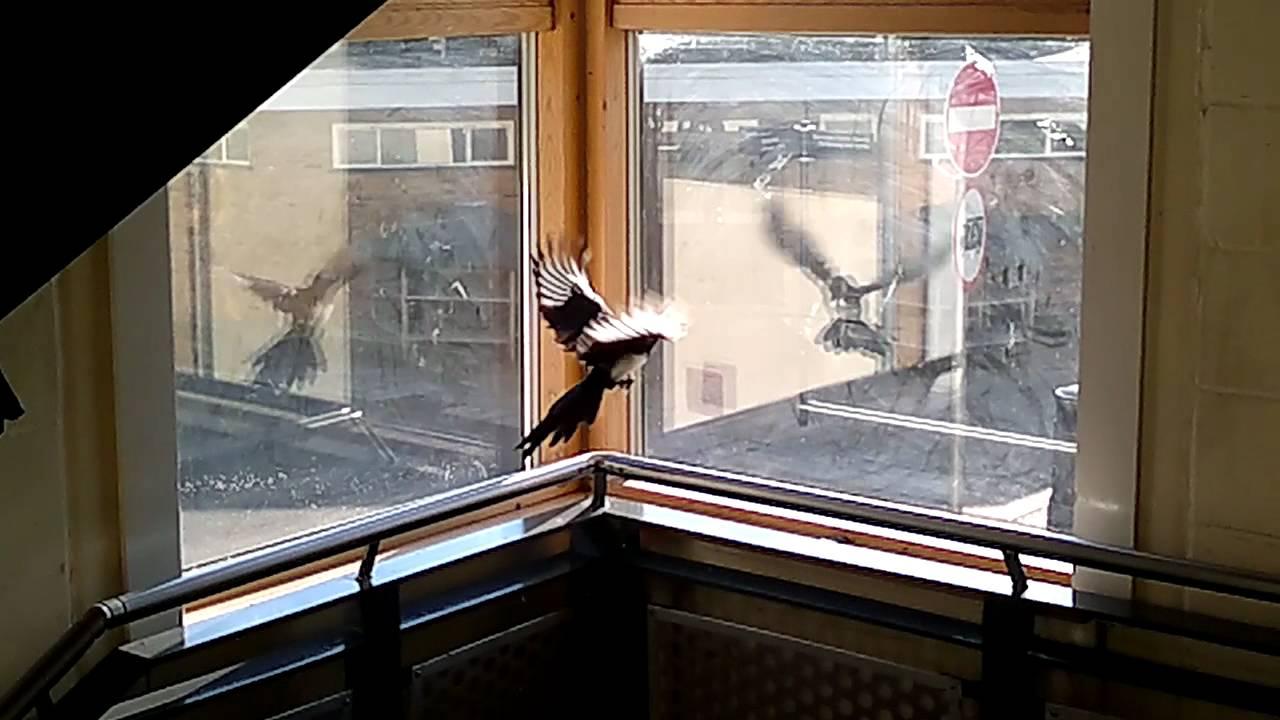 К чему стучится птичка в окно - примета