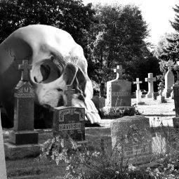 К чему снится кладбище и могилы женщинам и мужчинам - толкование