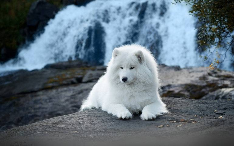 Белая злая собака