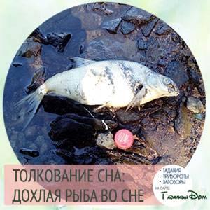 Сонник мертвая рыба реке. к чему снится мертвая рыба реке видеть во сне - сонник дома солнца