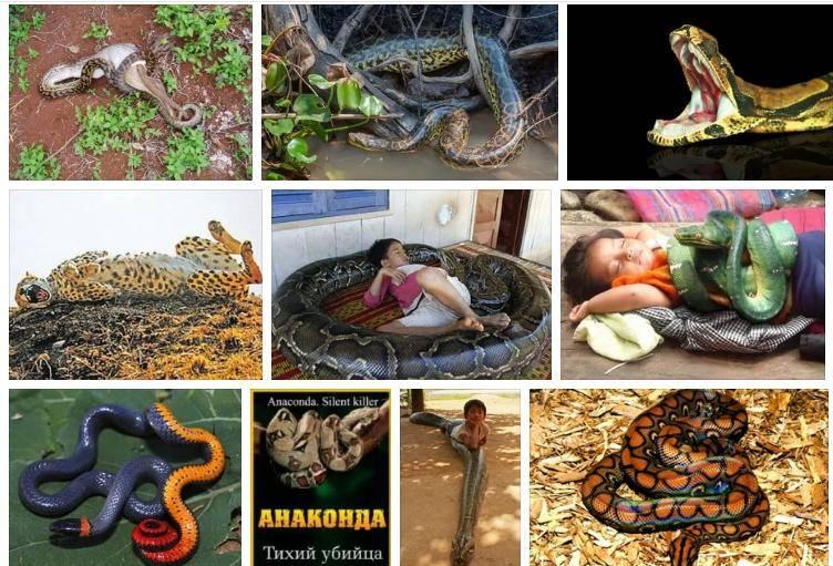 Сонник серая змея. к чему снится серая змея видеть во сне - сонник дома солнца