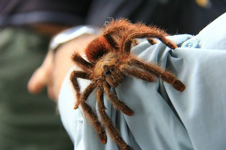 К чему снятся пауки много. приснились маленькие, большие, черные, белые