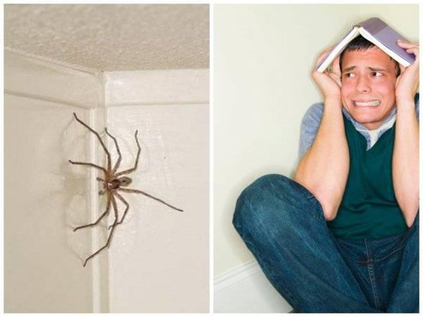 Сонник смахивать пауков. к чему снится смахивать пауков видеть во сне - сонник дома солнца
