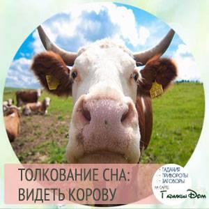 Сонник корова к чему ? снится, приснилась корова во сне?