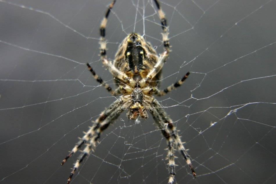 Примета — паук в доме и ее значение у наших предков