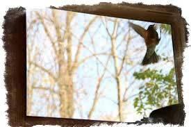 Птица стучит в окно: примета, что это значит