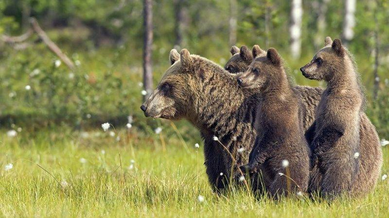 К чему снится женщине медведь: белый, бурый, большой, разъяренный, в лесу, в доме, кормить, гладить, прятаться н1 – к чему снится женщине медведь замужней, незамужней, беременной – толкование по разным сонникам