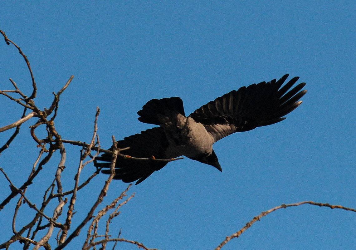 Приметы: птица накакала на голову, одежду, плечо или руку