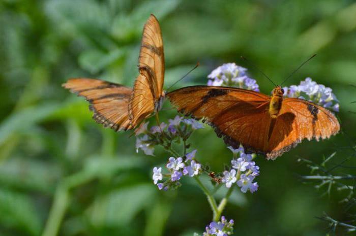 Бабочка залетела в дом: значение приметы