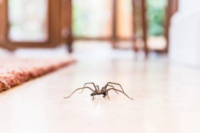 Самые известные приметы о пауках