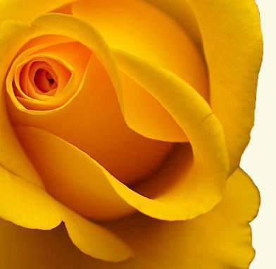 Что означает желтый цвет Значение желтого цвета в символике, психологии и языке цветов